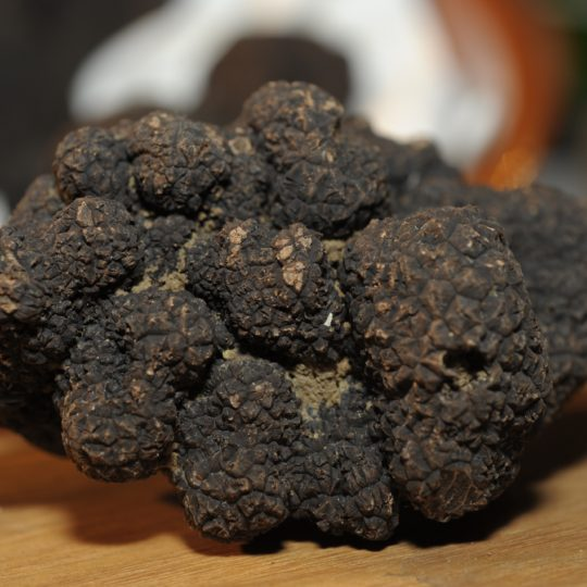http://www.laboucleromaine.fr/wp-content/uploads/sites/6/2019/02/truffes-8-540x540.jpg