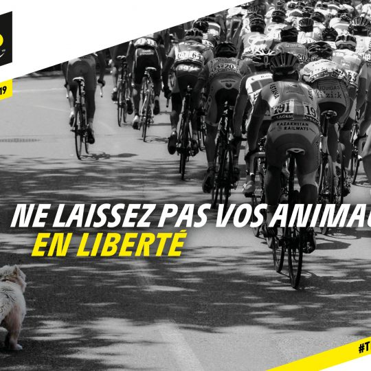 http://www.laboucleromaine.fr/wp-content/uploads/sites/6/2019/07/CYC19-TDF_SECU-2019_FR_RS_ANIMAUX-540x540.jpg